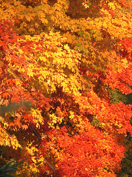 Autumn_colors_2750