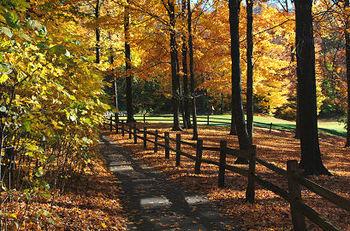 Autumn_fence_7248
