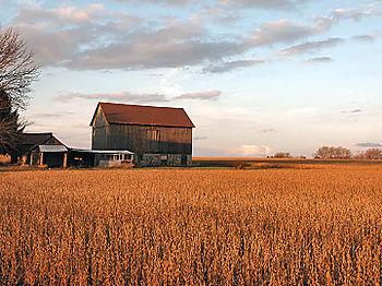 Autumn_field_3597
