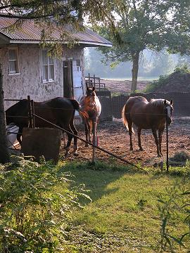 Horses_at_dusk_0569