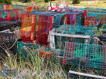 Lobster_traps_1328