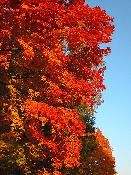 Trees_on_fire_2757