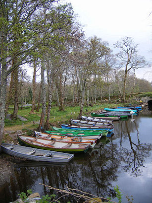 Ireland_row_boats_2434