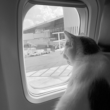#WilsonTheCat says goodbye to Mexico and Hello to America
