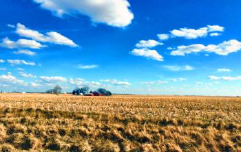 Winter Corn Field 0001