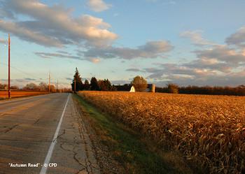 Autumn_road_3590