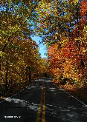 Fall_road_3463